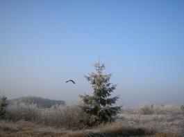 ptak21.jpg