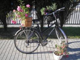 Ogród na kółkach - Garden on wheels
