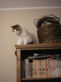 Nasz kot - Nina-Our cat - Nina