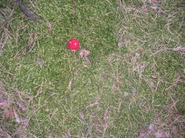 Szydełkowe grzyby - Crocheted mushrooms