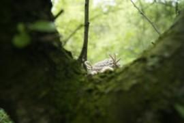 Szydełkowa sowa