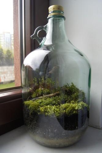 Ogród w butelce